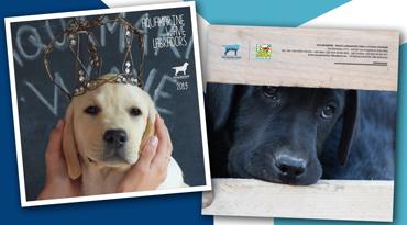 Il 2019 insieme ai nostri Labradors